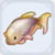 white cloud fish
