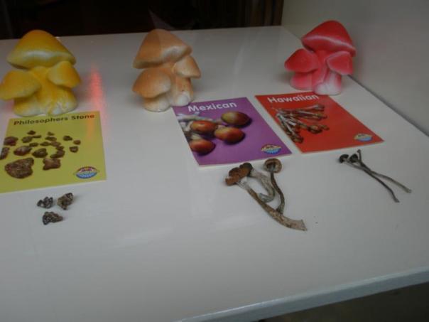 Magic Mushrooms .