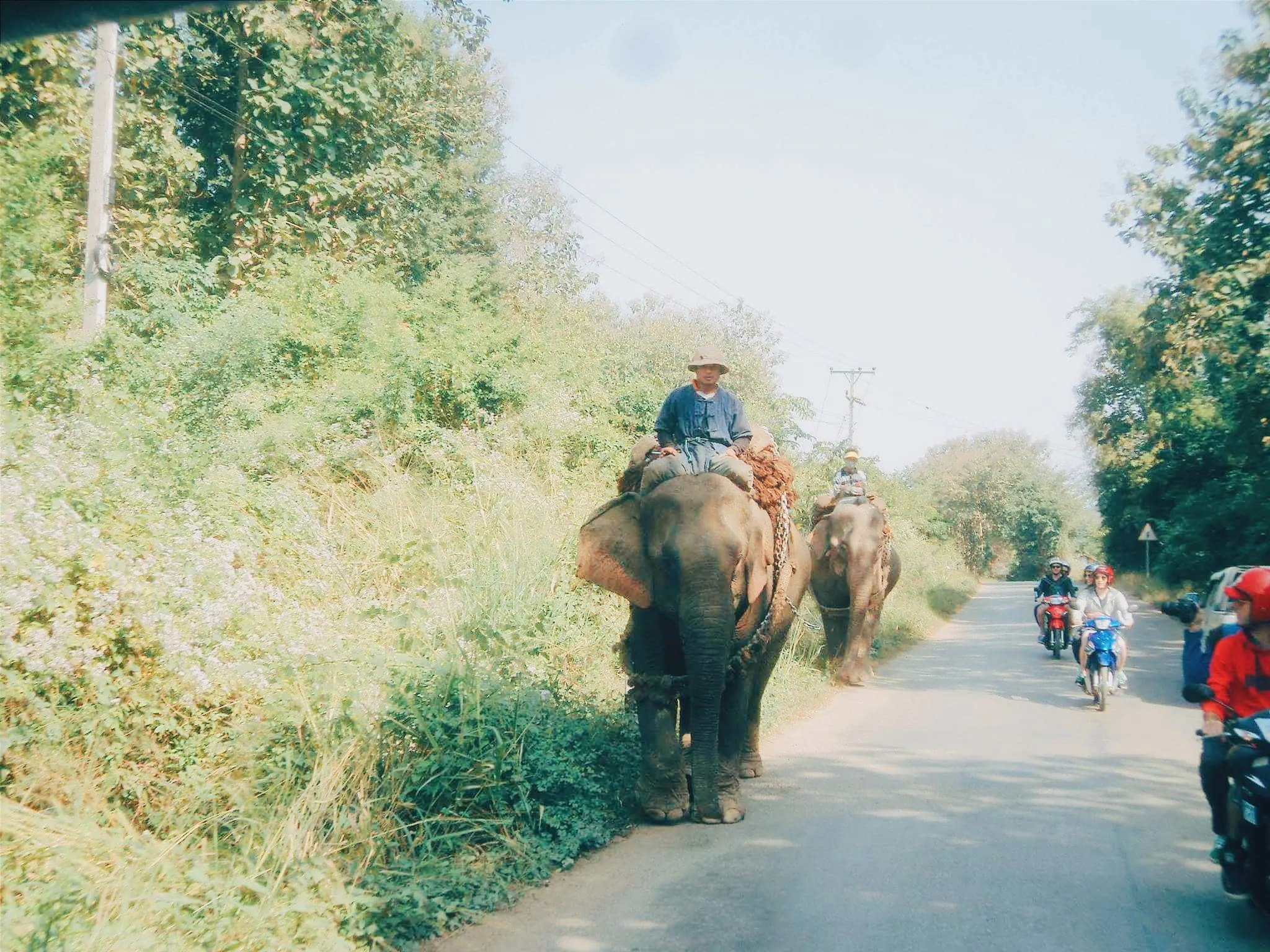 Riding an elephant backpacking in Laos.