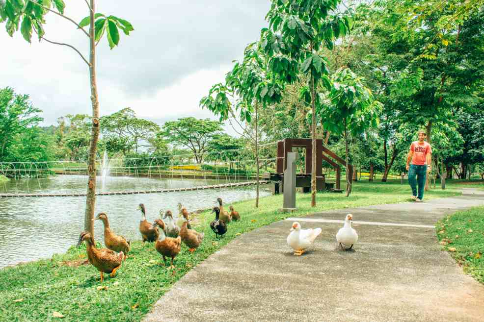 how to get to Nasugbu from Manila, food to try in Nasugbu, Pico Sands Hotel