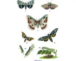 Vykort | Fjärilar