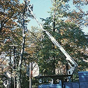 tree_removal_1