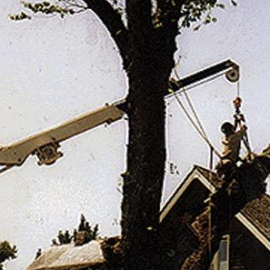 tree_removal_2