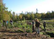 Skovhavekursus, kvikgræs og rådyr