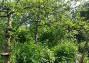 Skovhavedesign