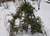 Vintersysler i skovhaven
