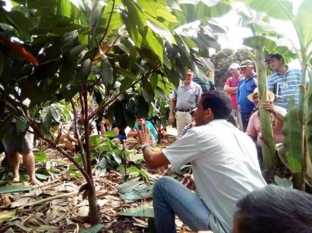 Agricultores-participam-de-demonstra%C3%A7%C3%A3o-de-m%C3%A9todo-de-poda-de-cacau Produtores rurais participaram de seminário sobre Cacau clonal