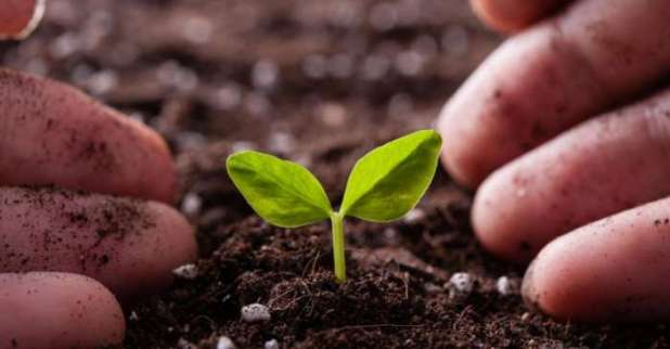 Governo-divulga-o-cronograma-de-libera%C3%A7%C3%A3o-do-or%C3%A7amento-para-o-Programa-de-Seguro-Rural Governo divulga o cronograma de liberação do orçamento para o Programa de Seguro Rural