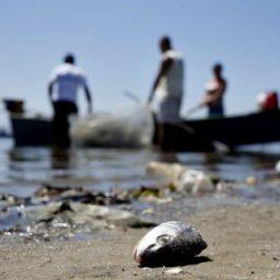 Praias baianas atingidas por óleo registram redução de 47% de espécies marinhas, diz Ufba