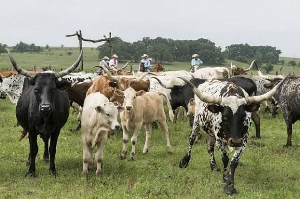Produ%C3%A7%C3%A3o-agroflorestal-de-cacau-rende-mais-que-gado-na-Amaz%C3%B4nia-1 Produção agroflorestal de cacau rende mais que gado na Amazônia
