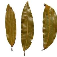 Spices: What are Indian Bay Leaves? | Teja Patta