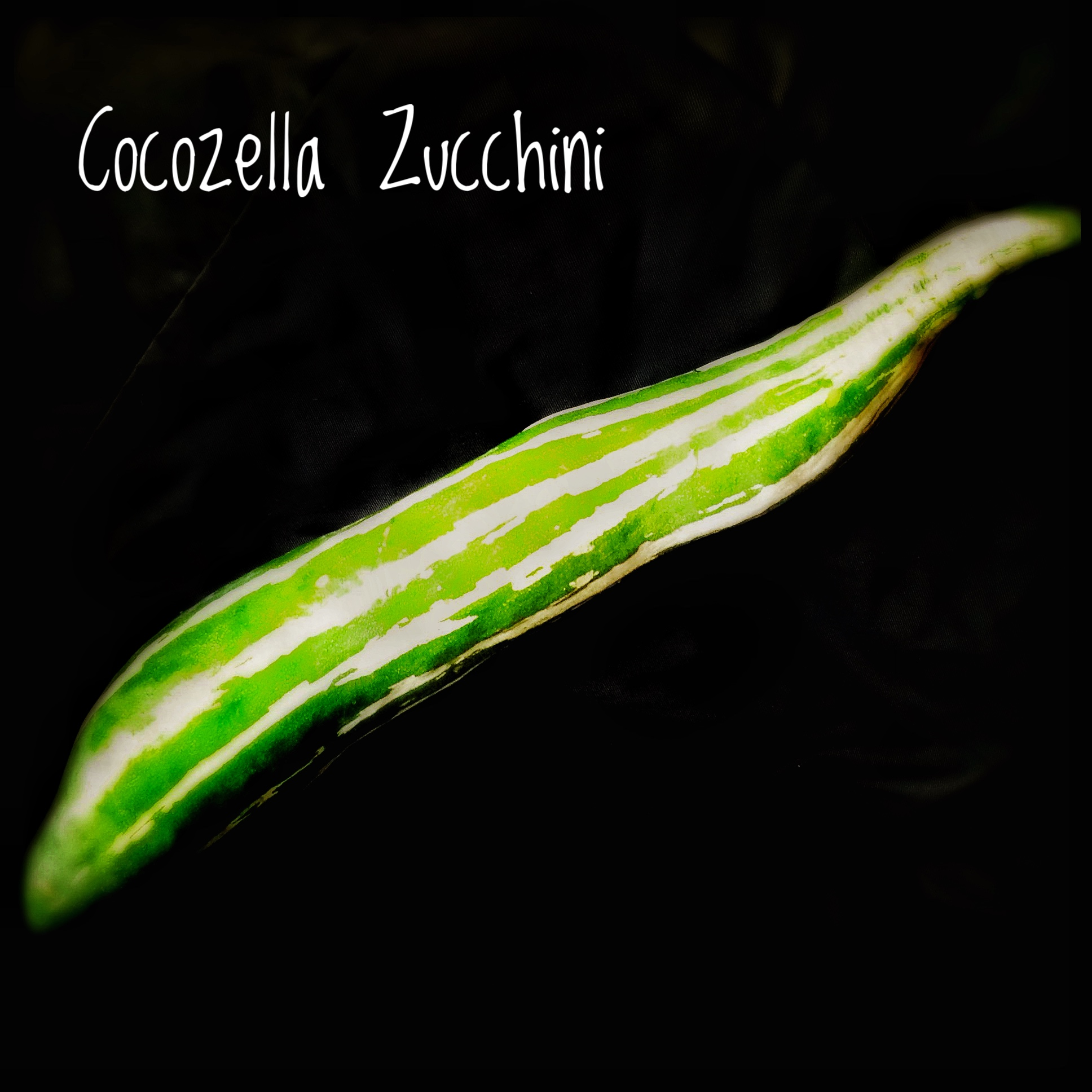 Ingredients: What is Cocozella Zucchini?