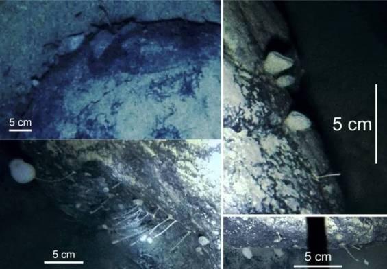 Forme de viață bizare descoperite sub gheata din Antarctica!