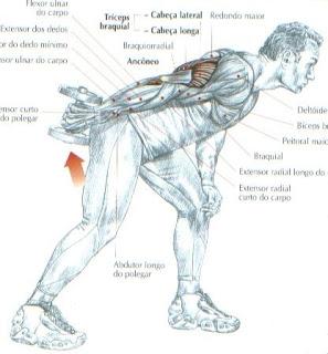 title>tríceps>alt>tríceps