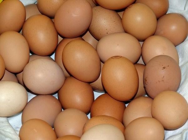 Quantas gramas de proteína tem um ovo e beneficios