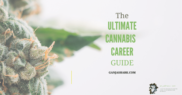 Dispensary Jobs Guide