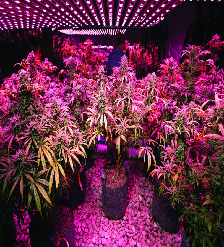 Philzon Grow Light