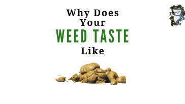 Why Does My Weed Taste Bad?