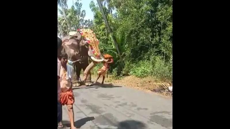 パレード中の象が急にパートナーの男性を突き飛ばしました。