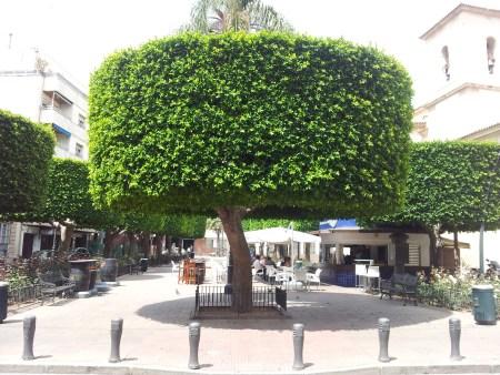 Nice bit of topiary