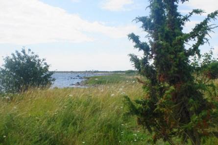 Natur Öland Wandern Schweden Urlaub mit Kindern