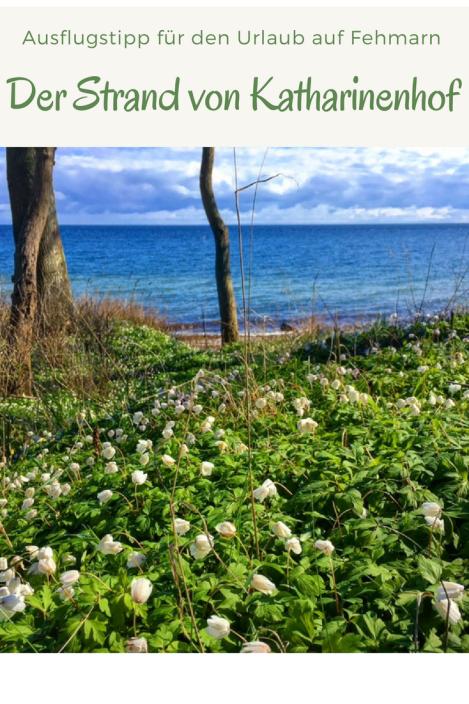Der Strand von Katharinenhof auf der Insel Fehmarn: Ein Ausflugstipp nicht nur für Familien mit Kindern. Dieses Steilufer an der Ostsee sollte man bei einem Familienurlaub nicht verpassen. Tipps für den Spaziergang und die Reise.
