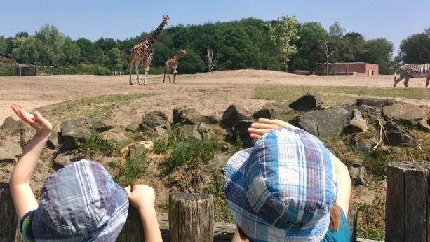 Safaripark Beekse Bergen Holland -- Reisebericht