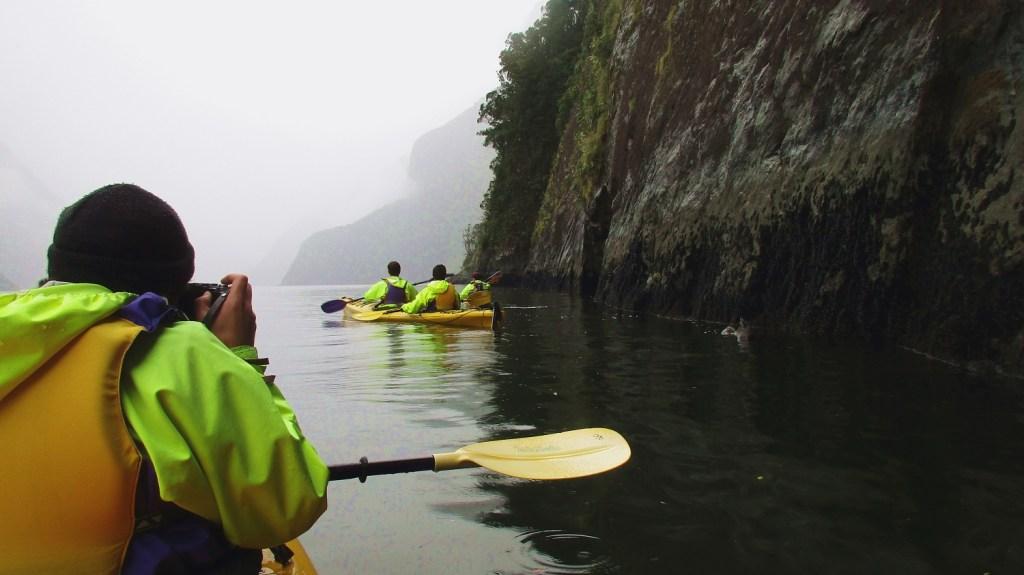 Kayaking in Milford Sound - foczki po prawej stronie :)