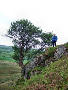 Tree on a Crag