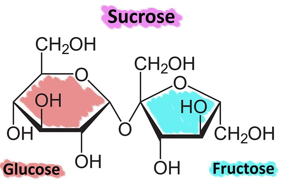Glucose vs. Fructose vs. Sucrose – What Is It All About? | GGP