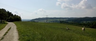 Zurück zum Ausgangspunkt Simbach: Asenbergalm mit kleinem Tierasyl, im Bild freilaufende Lamas