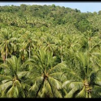 Coconut - The Timber of the Future?