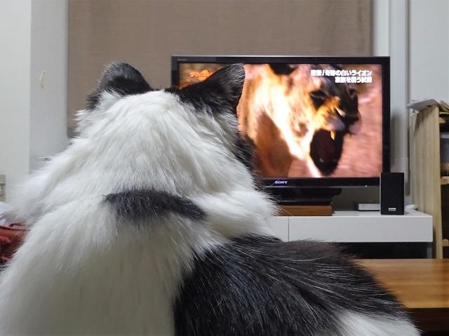 テレビを観ています。