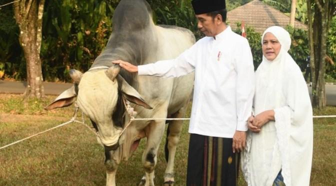 Salat Iduladha 1440H, Presiden Jokowi Serahkan Sapi Ongole seberat 1,2 ton
