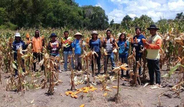 Kelompok Tani Program TJPS 'Lestari Indah' Belu Panen Raya Jagung
