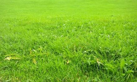 Rasen einsähen – Schritt für Schritt