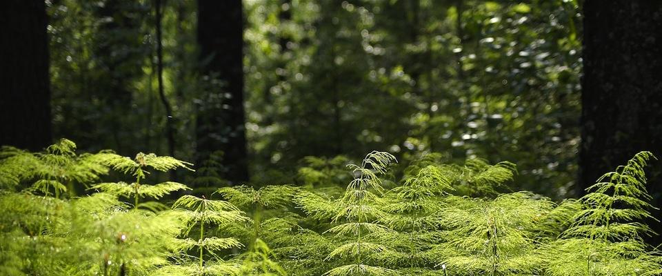 Waldboden soll Garten werden – so könnte es gehen