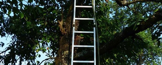 Auf dem Weg zur passenden Leiter für Haus und Garten