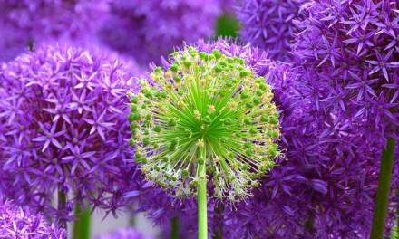 Frische Blumen aus dem eigenen Garten – die richtige Planung machts