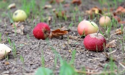 So könnt ihr Gartenabfall entsorgen