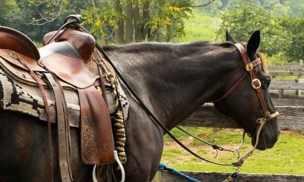 Achtung an Pferdebesitzer: Giftiges Jakobskreuzkraut auf Weiden