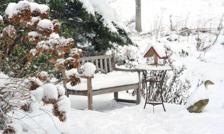 So übersteht euer Garten den Winter