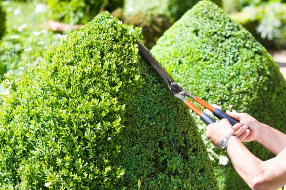 Cutting the Topiary
