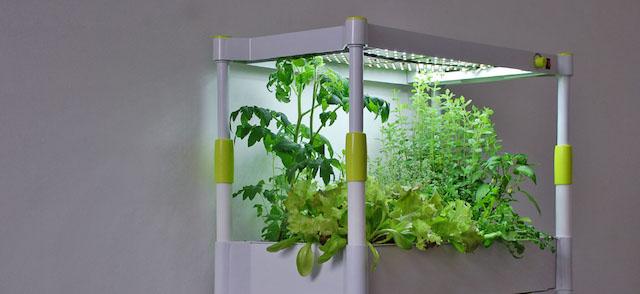 Kräuter anpflanzen ohne Sonnenlicht – GreenYou vorgestellt
