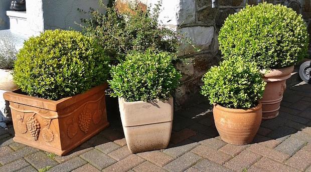 Bereit für den Frühling? Umgestalten mit Pflanzkübeln im Garten