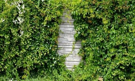 Schlichte Gartenmauern verschönern – Ideen und Tipps