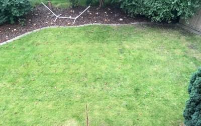 Wir testen Rasenprodukte von Tom (3): Erfahrungen mit dem Dünger