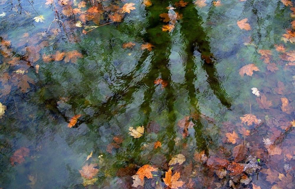Sponsored Post: Teichpflege im Herbst: Den Teich für den Winter rüsten