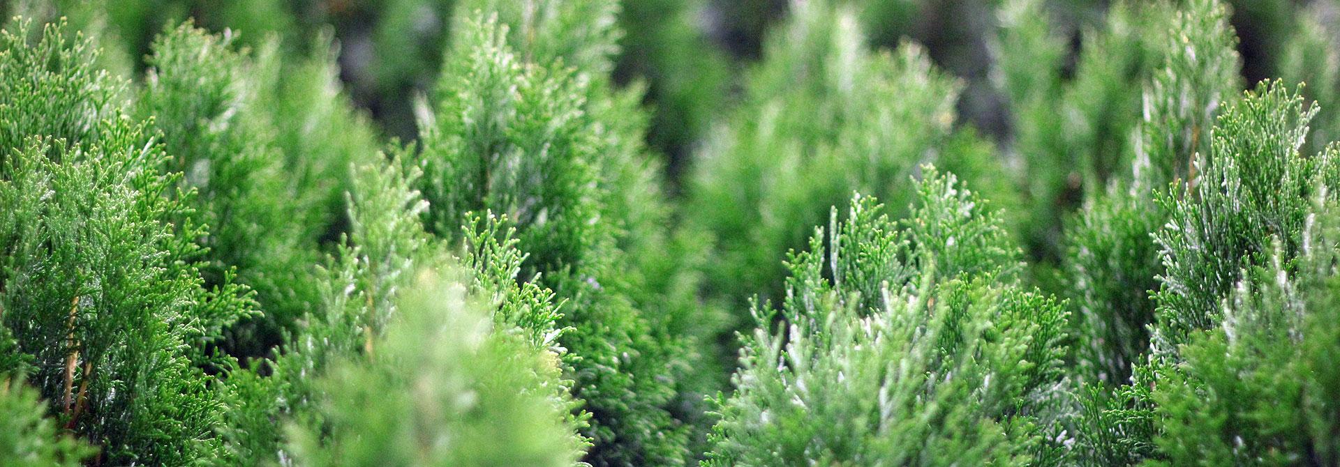 GardenLabel_etykiety-pętelkowe