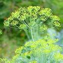 Herb Gardening Guide for Beginners